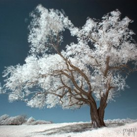 Infrarotfotografie auf den Elbwiesen von Schönebeck