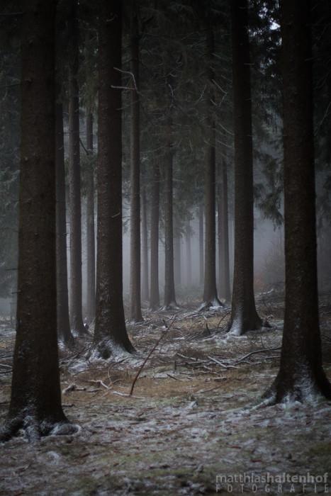 Frauenwald 1