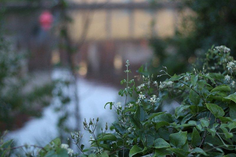 Canon EF 50mm F/1.8 STM Test - Blumen und Saalekahn