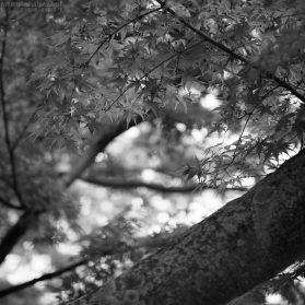 Japanischer Garten - egapark Erfurt 7