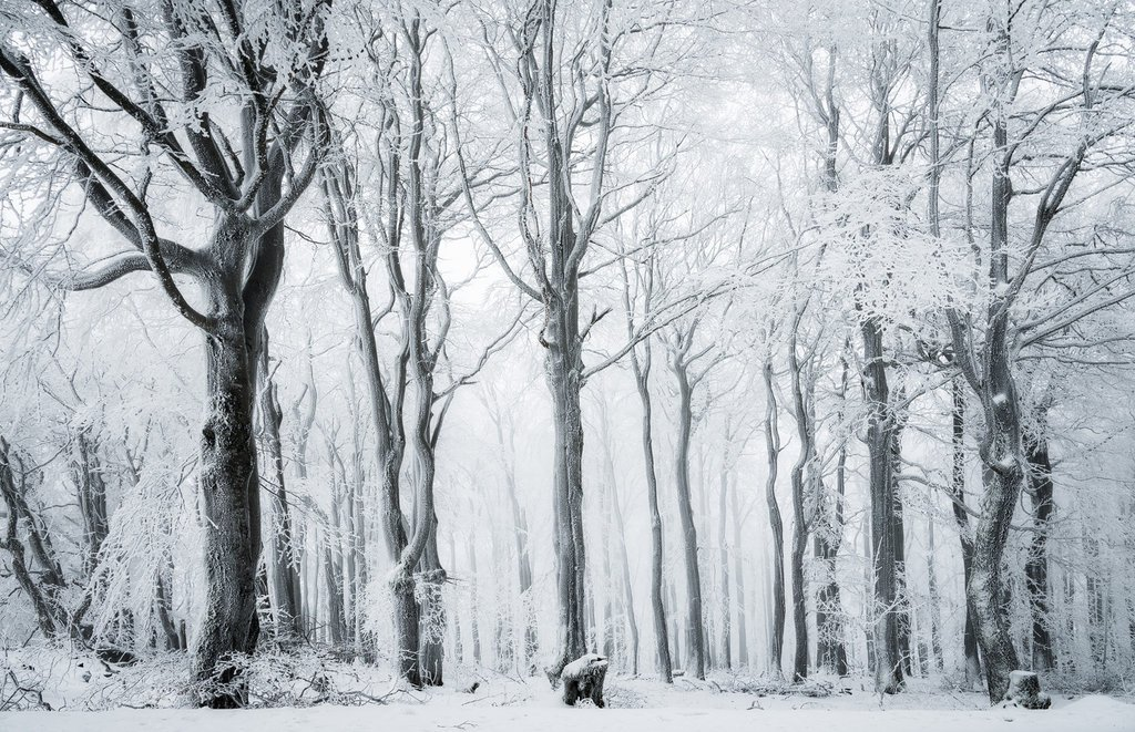 Heiko Gerlicher - Wald 100