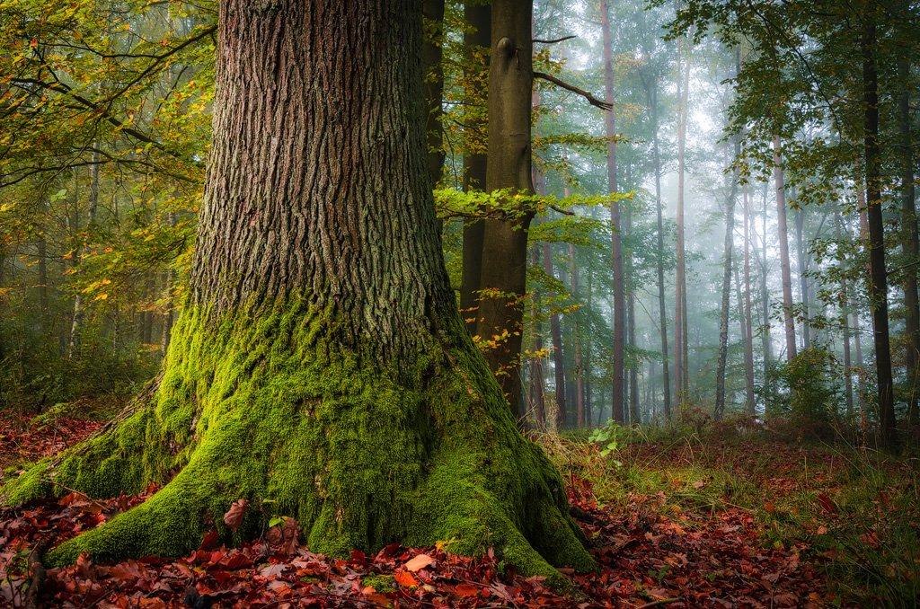Heiko Gerlicher - Wald 44