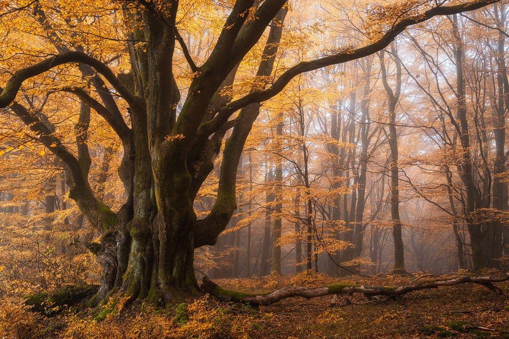 Heiko Gerlicher - Wald 63