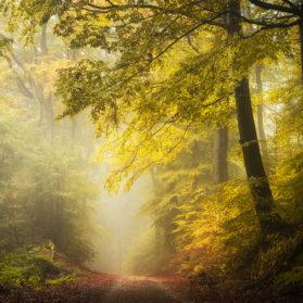 Heiko Gerlicher - Wald 65