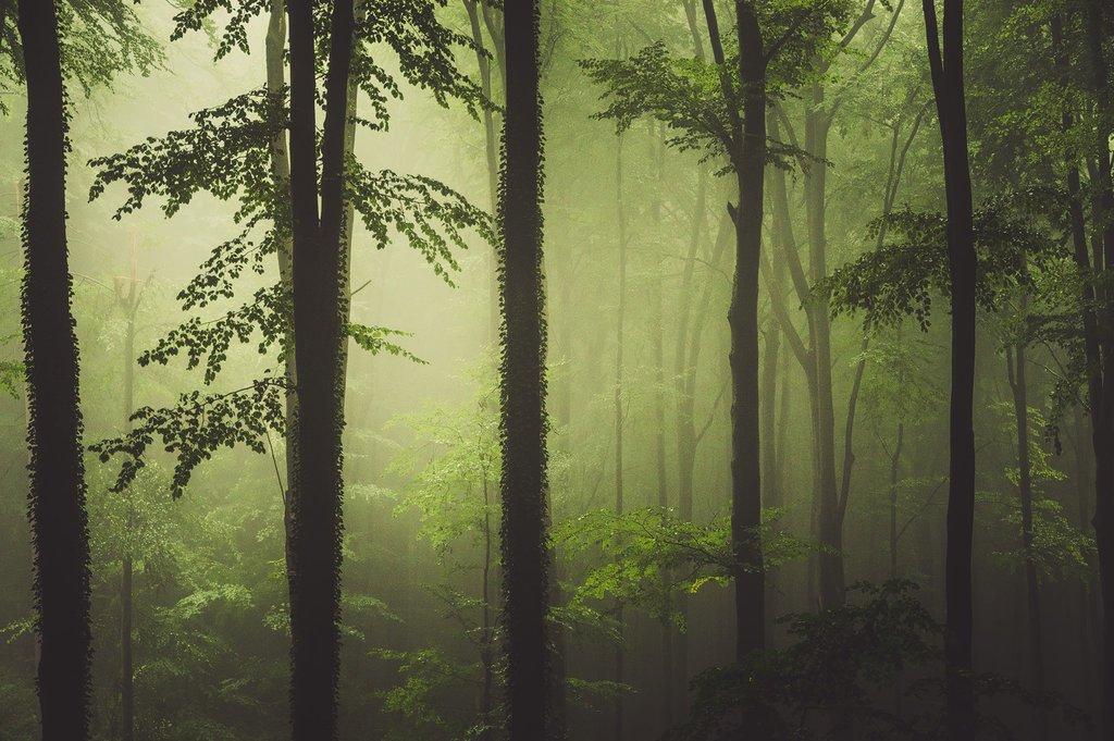 Heiko Gerlicher - Wald 76