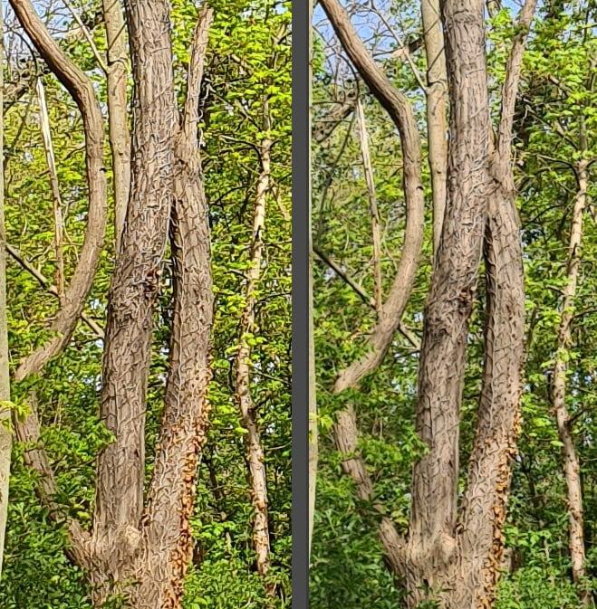 Samsung Galaxy S10 VS S20 - Vergleich Hauptkamera 100 % Bildausschnitt