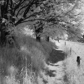 Walking in Whiteland 1