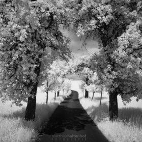 Walking in Whiteland 3